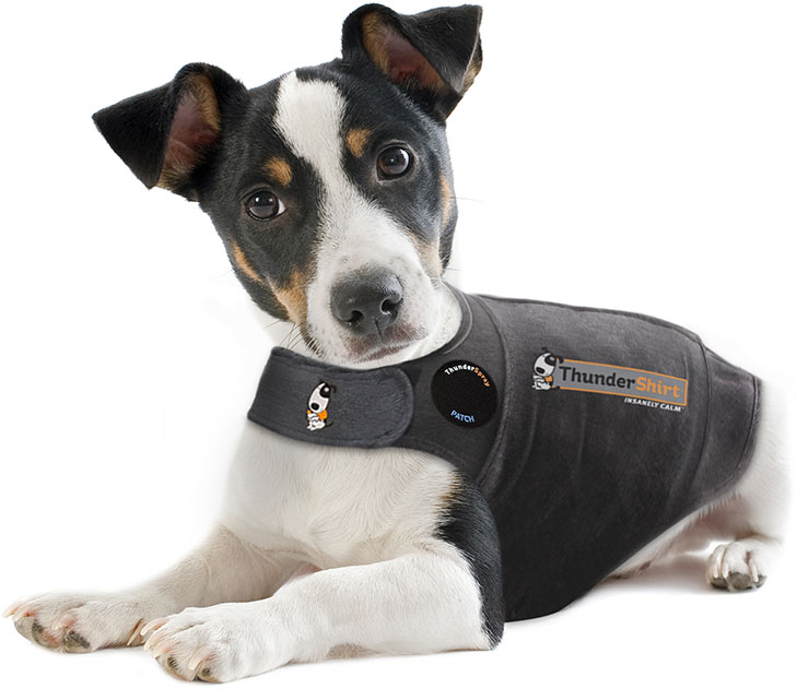 thundershirt-dog